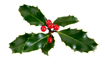 Holly, ilex, with red berries. Isolated on white.