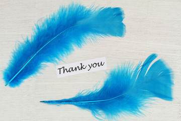 Thank you card with two blue bird feathers