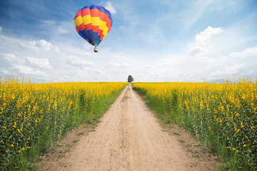 Hot air balloon over yellow flower fields