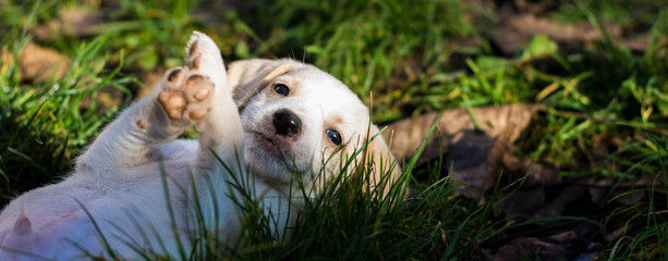 White puppie