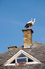 Two storks on chimney