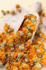 Marigold dried flowers in a scoop - calendula