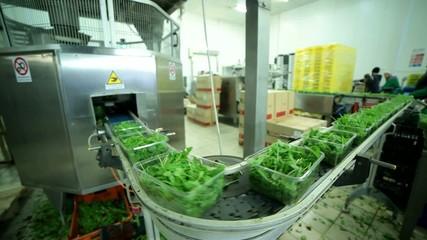 Macchine industriali, confezionatrice verdure