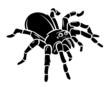 Spider - 73953180