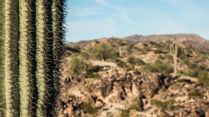 Cactus Needles Arizona