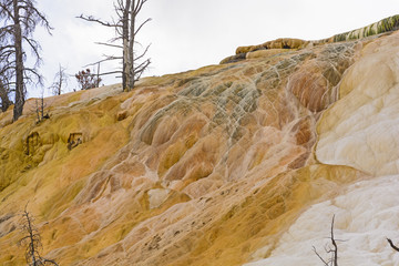 Travertine and petrified trees in Yellowstone