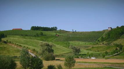 Vineyard on a hill in Croatia long shot