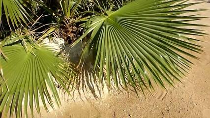 tropical plqant