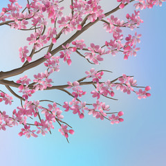 Spring Cherry Sakura Background