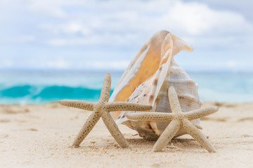 sea shell and starfish on tropical sand beach and sea background