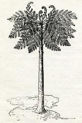 Tree fern 300 000 000 years ago