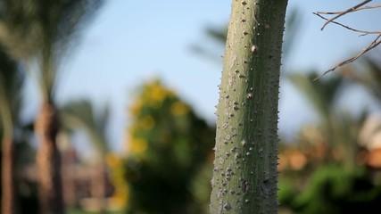 stem succulent garden