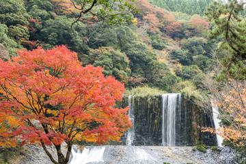 龍門の滝とイロハカエデの紅葉