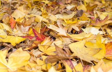 Autumn foliage, Tuscany