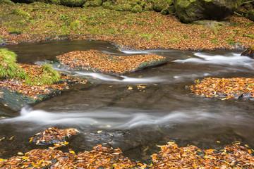 落ち葉と菊池渓谷の流れ