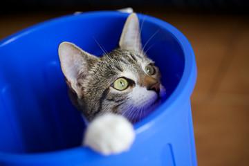 cat in a bin
