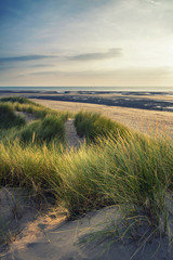 Summer evening landscape view over grassy sand dunes on beach wi © veneratio