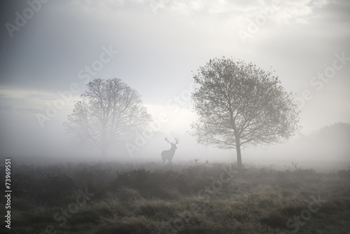Red deer stag in atmospheric foggy Autumn landscape - 73969551