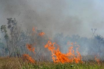 Fierce brushfire with smoke, Kakadu National Park