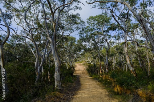 Keuken foto achterwand Bossen Fire trail in the Australian bush