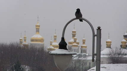 Crow on  lamp against Christian churches. Winter, blizzard