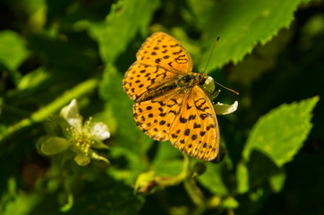 Orange butterfly on a green leaf at forest