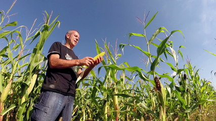 Agriculturist Checking His Corn Crop in Field