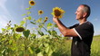 Agriculturist Checking His Sunflowers