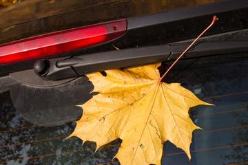 Herbstblatt an einer Autoscheibe