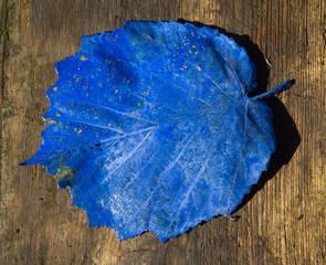 Blaues Blatt auf Holzbrett