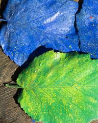 Zwei bunte Blätter