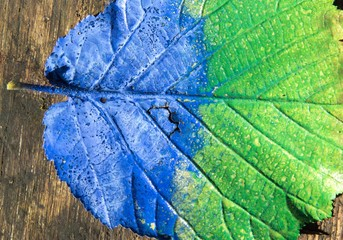 Blaugrünes Blatt auf Holzuntergrund
