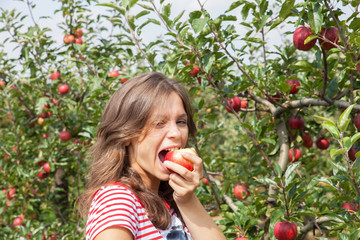 woman apple orchard