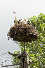 Storks sit in the nest on a pole