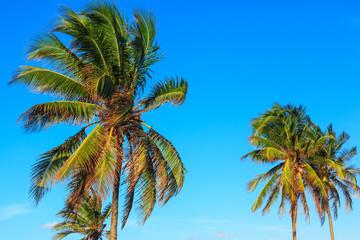 palm against the sky
