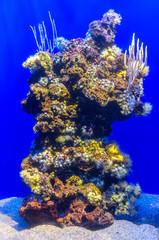 Freshwater blue aquarium with corals.