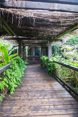 Wooden pathway in tropical rain forest.
