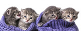 cute newborn kittens close up - 73985919
