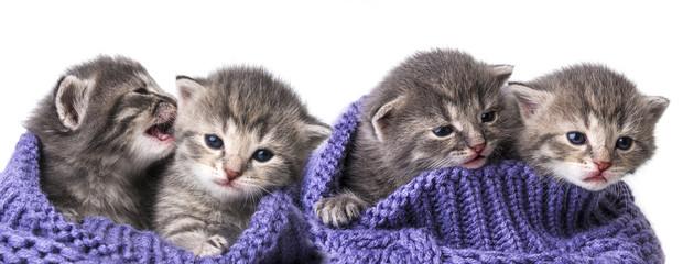 cute newborn kittens close up