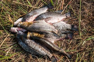 Fish Caught