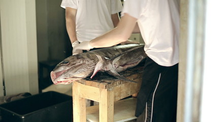 Fish production guys undress a body of big swordfish