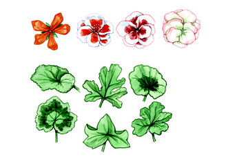 Types and forms of leaves and flowers. Botany
