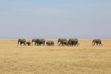 Elefantenherde
