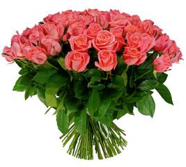 Anna Karina 101 rose
