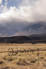 Owen's Vally Sierra Neveda Mountains Livestock Cattle Ranch