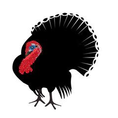 turkey silhouette white background