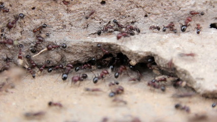 Ants at the entrance to the anthill