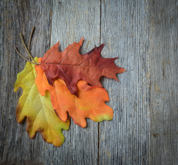 autumn leaves on rustic wooden background