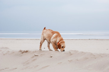 Walking puppy dog