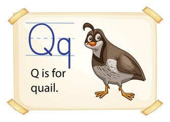 A letter Q for quail